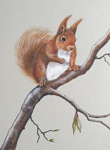 Red Squirrel, Jan Ferguson, Watercolour and gouache, June 2019, 40 x 50cm (approx.)