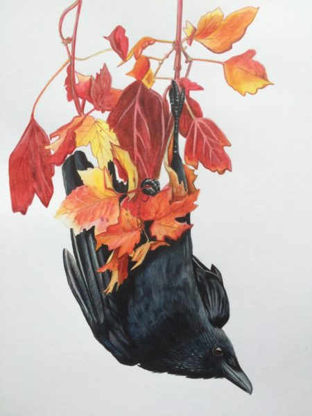 Crow in Autumn, Kirstin Armstrong, #010:  mixed media, 36.5x49.5cm