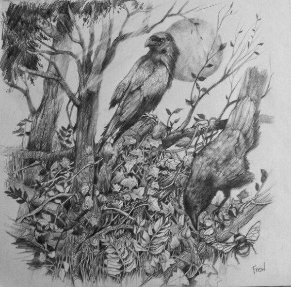 Forest floor, Doreen Davis (Frew), Pencil Framed 38x38cm