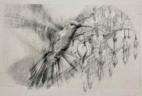 Hummingbird and Dicentra, Judith Spence, Graphite and Carbon drawing Framed 42cm x49cm