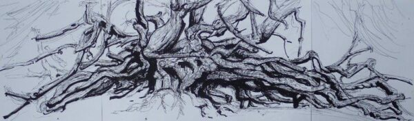 The Crom Castle Yew, Geraldine McSporran, Pencil, Indian ink and Marker Pens Unframed 30cm x 84cm